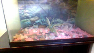 Fish tank on stand 15 gallon