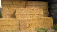 Wheat Straw 8' bales