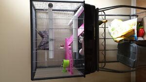 Grande cage et 2 rats femelles 1ans