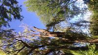 TREE SERVICE- J.R. Tree Service