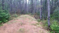 Spruce trees for sale - Sundridge Ontario