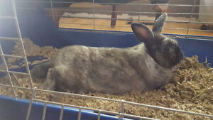Beautiful friendly bunny needs new family