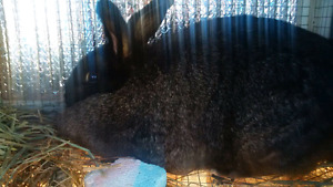 Bunnies to rehome