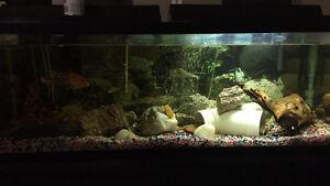 Anchor tank 50 gallon