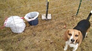 Professional Pet Waste Services! Dog Poop Spring Clean Up!