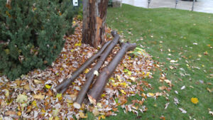 Maple branches for firewood. Longest approx 8 feet long.
