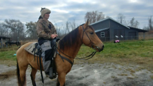 Best Trail Horses For Sale - Guaranteed - Beginners Welcome!