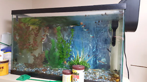 20 gal w fish or without