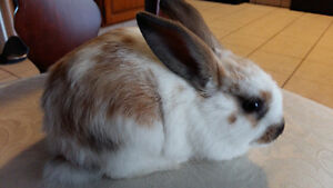 Bunnies need a new home