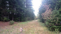 GREAT HUNTING AREA, POND, 116 ACRES, NO POWER