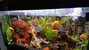 Beautiful fish tank with over $1000 in additional decorations.