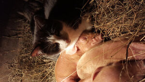 Piglets and weaner pigs