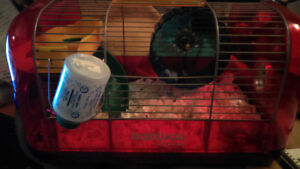 Hamster cage and 9 week Syrian.   Price firm