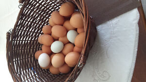 Free range farm eggs(no charge for drop off)