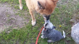 Reliable and trustworthy house/pet-sitter
