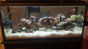 30G Saltwater Tank w / stand - REDUCED