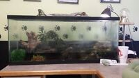 Red ear slider turttle and tank