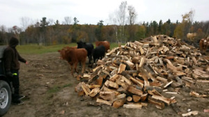 Dry firewood All quantities
