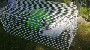 11 month old female bunny