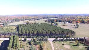2 maisons - 2 plantations - NÉGOCIABLE Gatineau Ottawa / Gatineau Area image 4