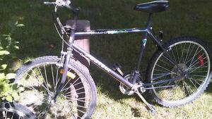 assortment of bikes