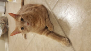 4 year old orange tabby looking for a nice new home