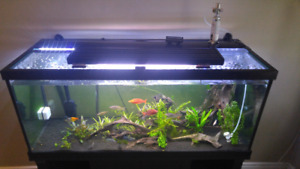 Brand new 75 gallon fish tank with fluval fx 4!