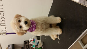 Specialized Small Dog Grooming