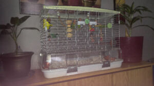 Baby lovebirds and cage