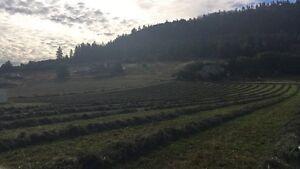 Second cut alfalfa