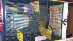 selling 2 ferrets with a big cage