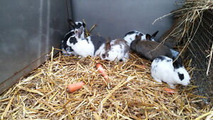 7 Cute Baby Bunnies for Sale