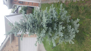 3 trees available for landscaping