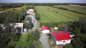 St-Sylvère près de Drummondville, ferme de veaux de lait