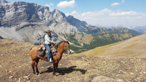 Ranch hand and equestrian experience