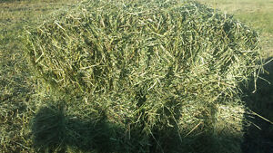 1st cut horse hay small squares