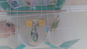 3 birds with a cage for sale