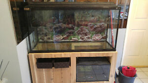 Complete set up with 2 Tanks 75g &10g Windsor Region Ontario image 1