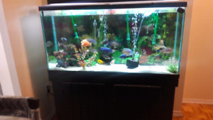 90 g  Aquarium& stand for sale