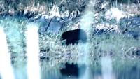 Wanted Black bear hunting