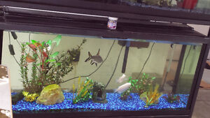 55 gallon tank with fish