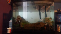 36 Gallon Bowfront Perfect Condition with Accessories