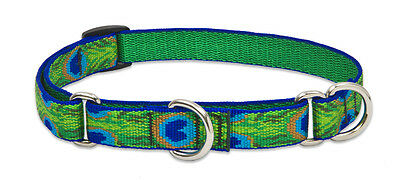 Lupine Combo Dog Training Collar. Martingale. Small-Large  3/4