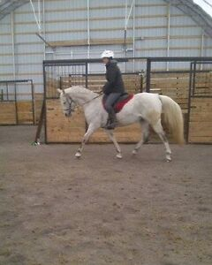 Awesome Riding Lessons Cornwall Ontario image 2