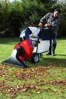 Nettoyage des feuilles automne, débris, arbre, cèdre, branche
