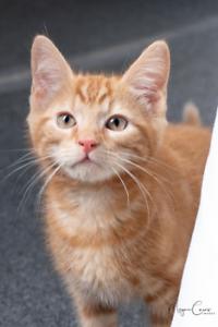 Hunter rescue kitten SK2645 VET WORK INCLUDED