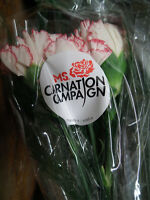MS Society, Carnation Campaign - Flower Delivery
