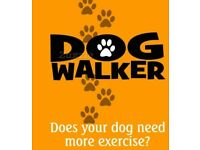 The best dog walker and pet sitting service
