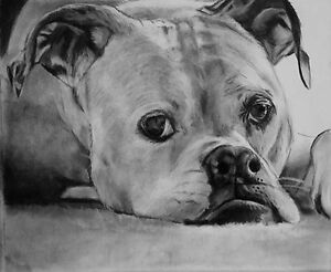 Charcoal Pet Portraits - custom dog drawings and cat drawings