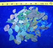 Sea Shells Lot